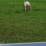 Supplement Could Help Control Horse Pasture Parasite Burden
